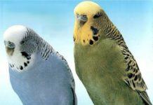 En güzel muhabbet kuşu isimleri